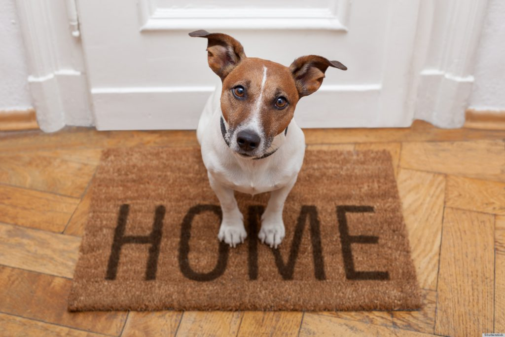 PET-And-HOME